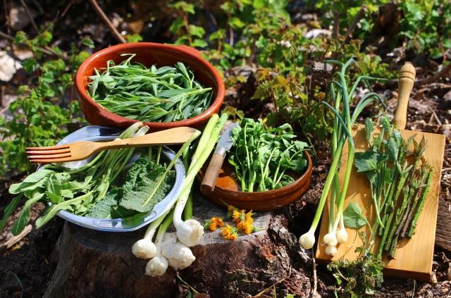 plantas-silvestres-comestibles